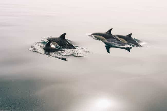 They Occasionally Practice Inc... is listed (or ranked) 4 on the list 11 Weird Sex Facts That Prove Dolphins Are DTF