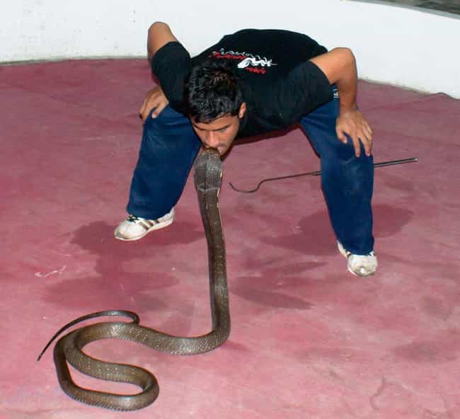 It's Going to Hurt All Ove... is listed (or ranked) 2 on the list What It's Like to Be Bitten by a Cobra