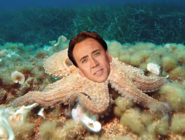 "He Got A Pet Octopus To ""H... is listed (or ranked) 2 on the list 10 Utterly Insane Things You Didn't Know About Nicolas Cage"