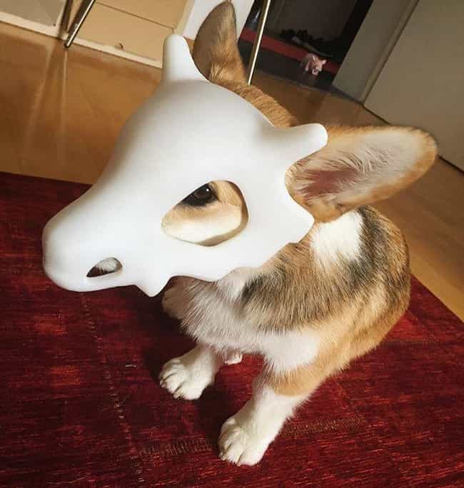 Cute Cubone Cosplay is listed (or ranked) 1 on the list 25 Adorable Pets Cleverly Dressed as Pokemon
