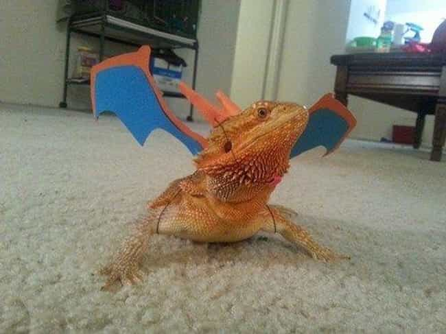Charizard, Minus the Fir... is listed (or ranked) 2 on the list 25 Adorable Pets Cleverly Dressed as Pokemon