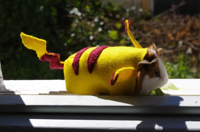 PikachuPig is listed (or ranked) 5 on the list 25 Adorable Pets Cleverly Dressed as Pokemon