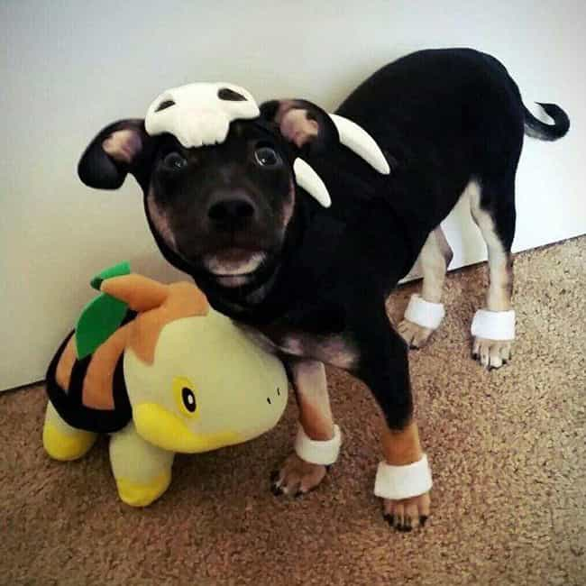Ain't Nothin' but a Houn... is listed (or ranked) 4 on the list 25 Adorable Pets Cleverly Dressed as Pokemon