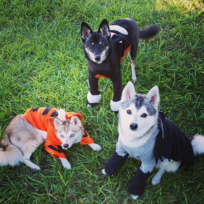 Growlithe, Houndour, And... is listed (or ranked) 8 on the list 25 Adorable Pets Cleverly Dressed as Pokemon