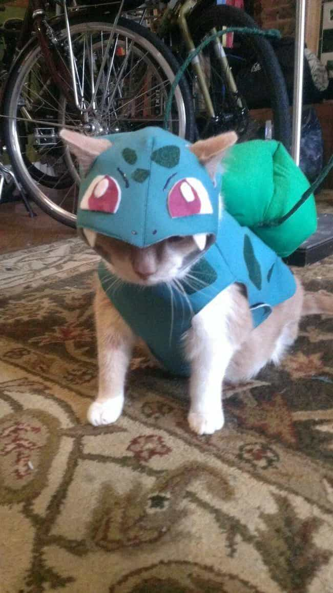 Meowbasaur is listed (or ranked) 7 on the list 25 Adorable Pets Cleverly Dressed as Pokemon