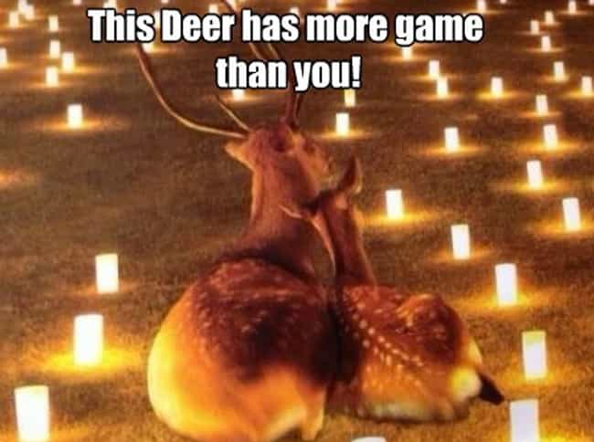 Oh Deer is listed (or ranked) 4 on the list 26 Memes That Every Painfully Single Person Can Relate To