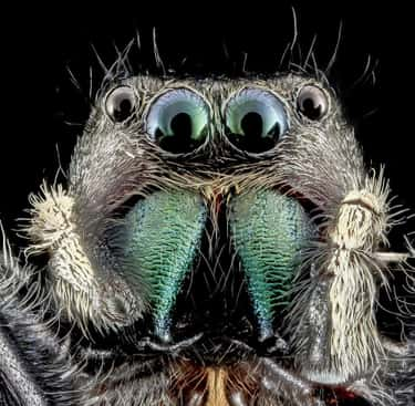 If You're Standing In Nature, A Spider Is Less Than Three Feet Away