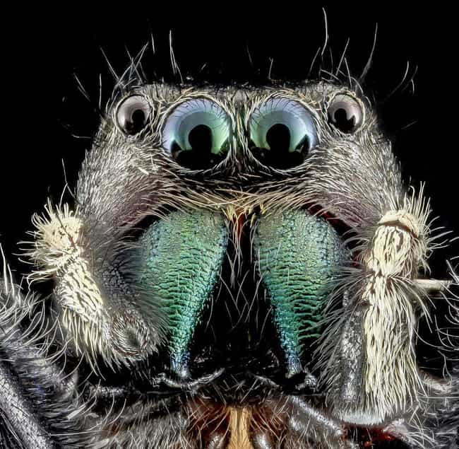 If You're Standing In Na... is listed (or ranked) 1 on the list 13 Disturbing Spider Facts That Will Make You Even More Scared Of Them