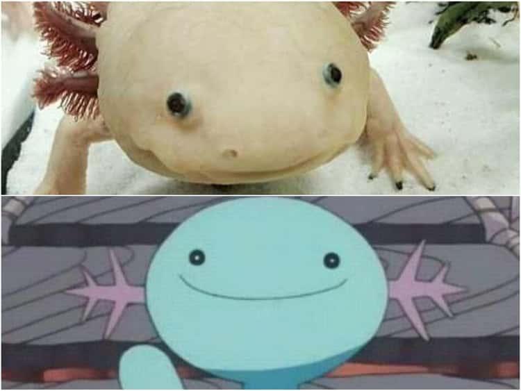 Axolotl/Pokemon Wooper