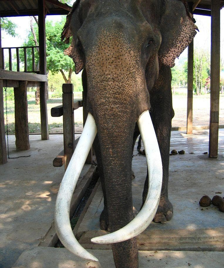 Random Facts About What It's Like To Be Killed By An Elephant