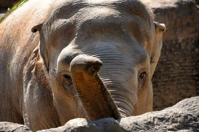 What It's Like To Be Killed By An Elephant