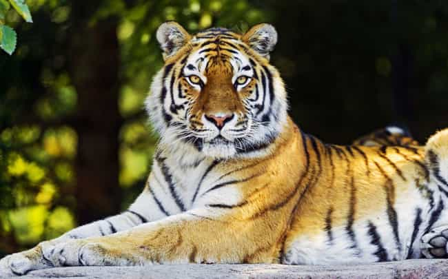 The Extinction Of The Sumatran... is listed (or ranked) 2 on the list 9 Critically Endangered Animals Whose Extinction Will Have Dire Consequences