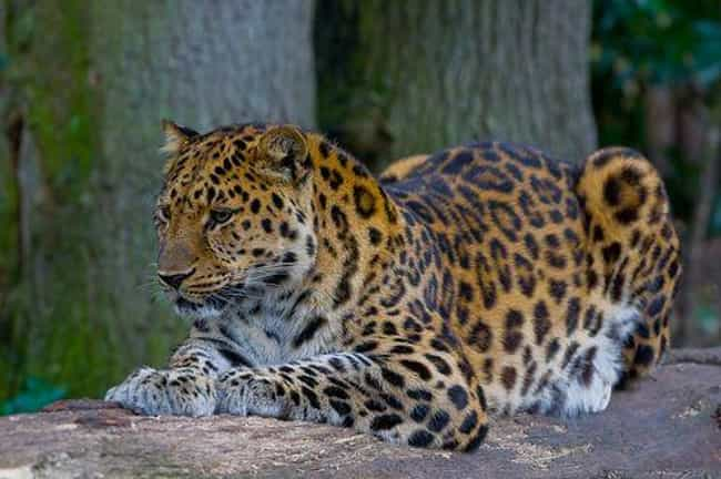 The Possible Extinction Of The... is listed (or ranked) 4 on the list 9 Critically Endangered Animals Whose Extinction Will Have Dire Consequences