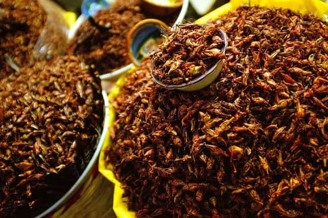 Insect Eating Will Sprea... is listed (or ranked) 4 on the list 10 Utterly Convincing Reasons Why You Should Be Eating Insects