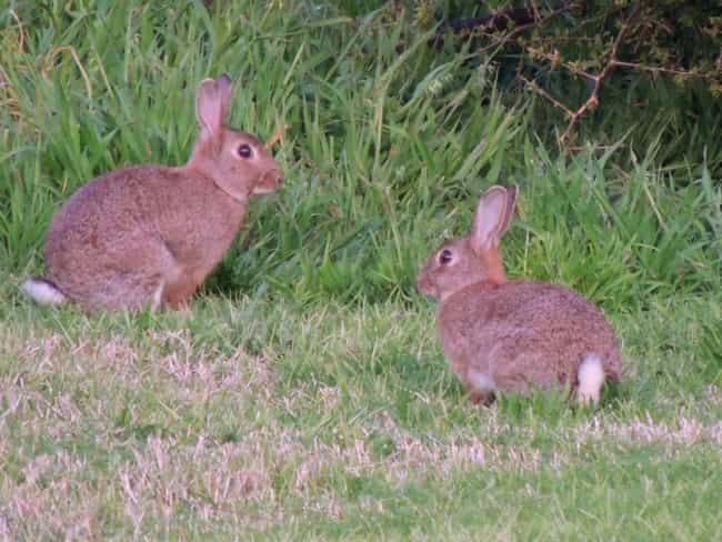 Rabbits Are Doin' It Like ... is listed (or ranked) 3 on the list Animals Who Just Love Getting Down And Dirty