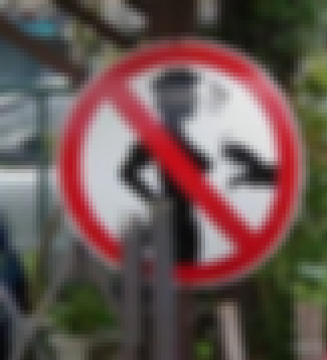 No Groping Zone is listed (or ranked) 1 on the list 24 Foreign Road Signs That Make No Sense