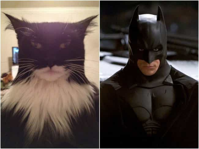 Bat Cat is listed (or ranked) 4 on the list 16 Animals That Look Like Famous Fictional Characters
