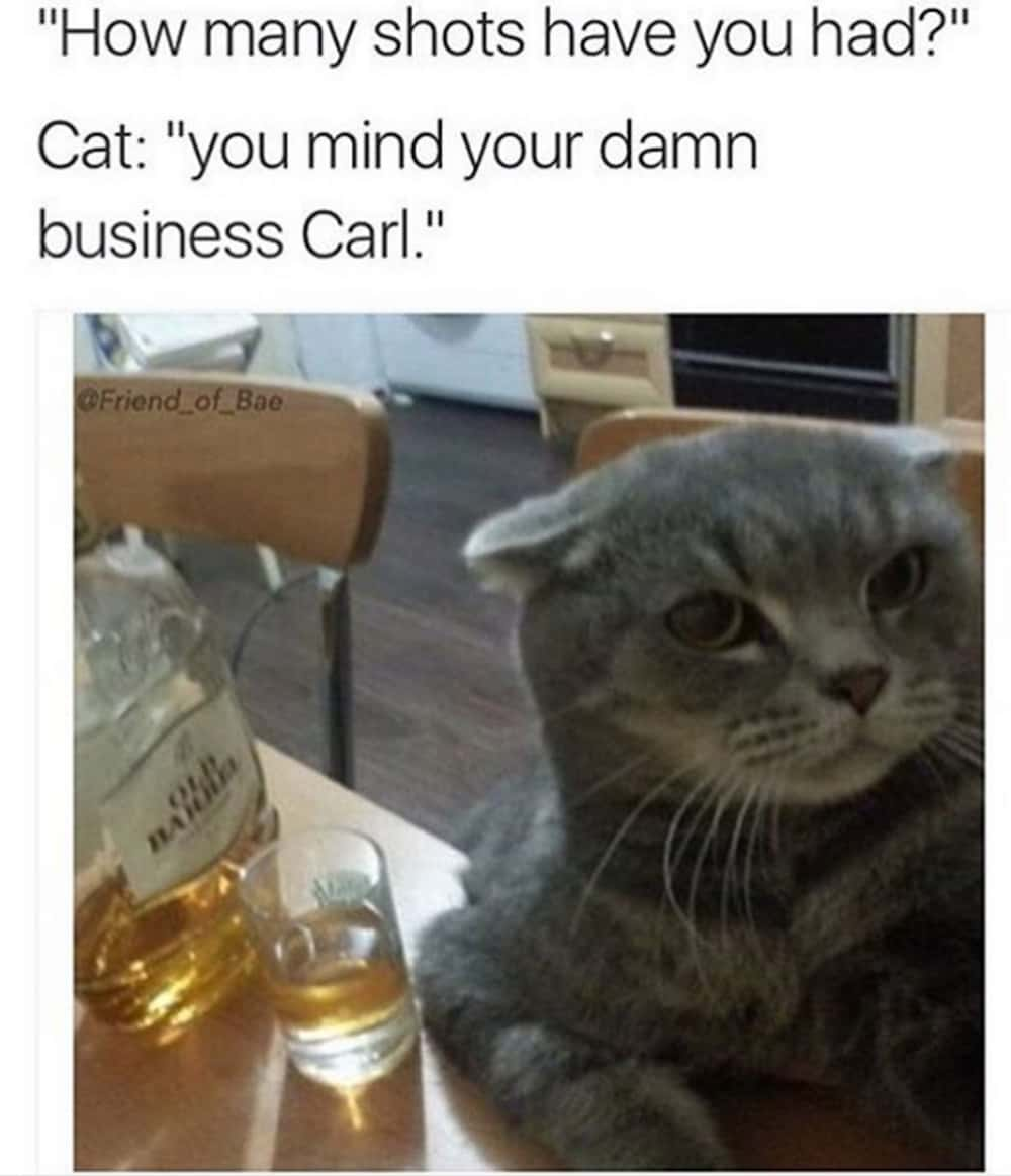 Funny Cat Drinking Meme : Funny memes about drinking and getting drunk