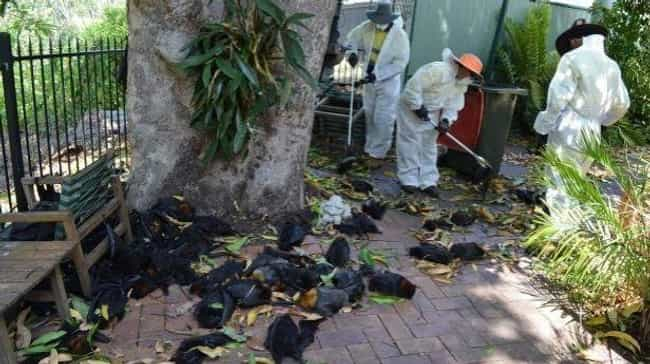Hundreds Of Bats Cooked Alive ... is listed (or ranked) 3 on the list Strange Cases of Mysterious Mass Animal Deaths