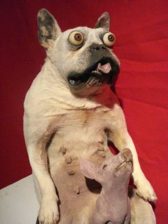 I Am Scared is listed (or ranked) 3 on the list 23 Horrifying Pieces Of Taxidermy That Actually Exist