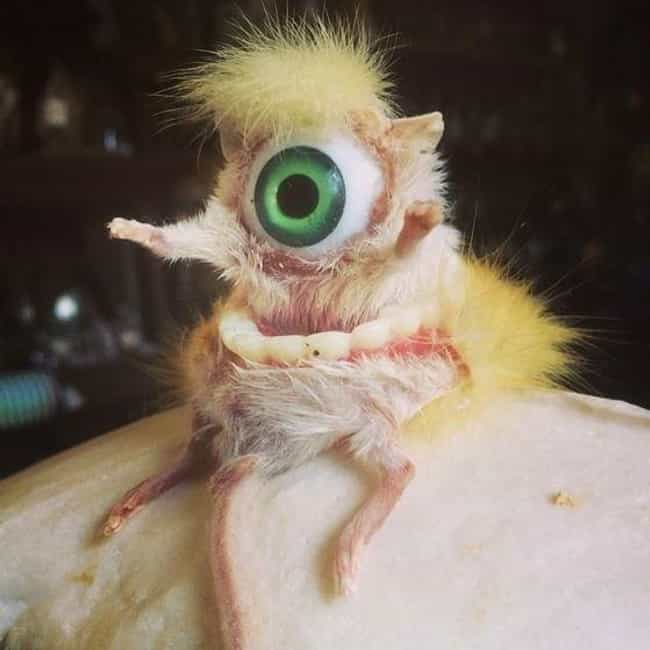 Mike Wazowski is listed (or ranked) 2 on the list 23 Horrifying Pieces Of Taxidermy That Actually Exist