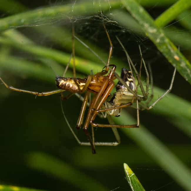 Male Spiders Literally Break I... is listed (or ranked) 2 on the list Most NSFW Spider Sex Practices