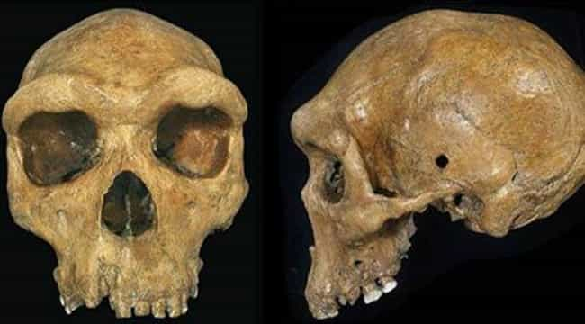 "A Neanderthal Skull Was Found ... is listed (or ranked) 2 on the list The 7 Stupidest Archaeological ""Discoveries"" In History"