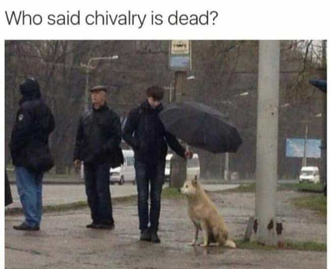 The Truth About Gents And Dogs is listed (or ranked) 3 on the list 24 Photos That Prove Chivalry Is Not Dead
