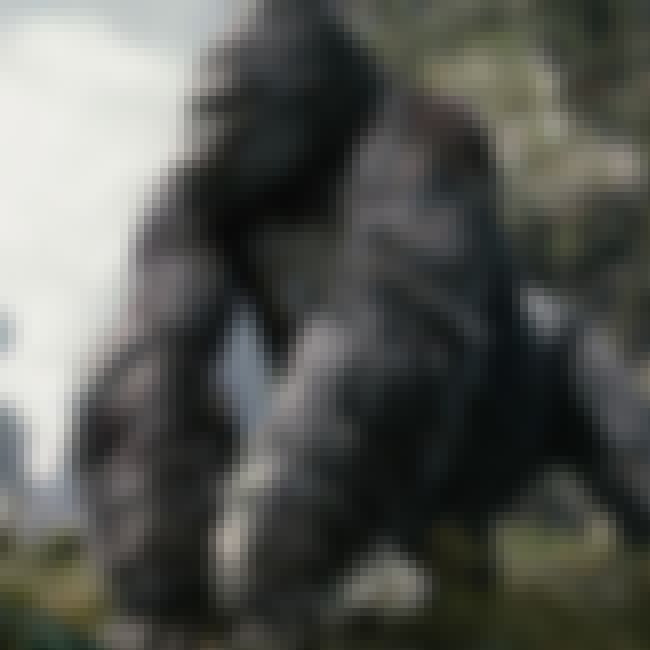 We Gotta Save Kong is listed (or ranked) 2 on the list Kong: Skull Island Movie Quotes