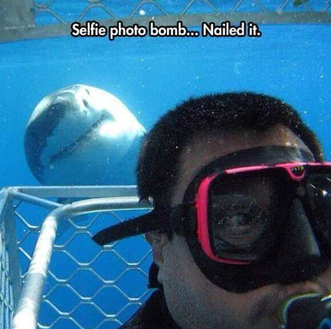 The Finn-ishing Touch is listed (or ranked) 1 on the list The Funniest Selfie Photobombs Ever