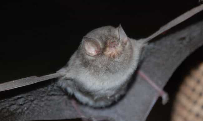 They Can Eat A Thousand ... is listed (or ranked) 3 on the list 17 Reasons Why Bats Are Actually Totally Badass