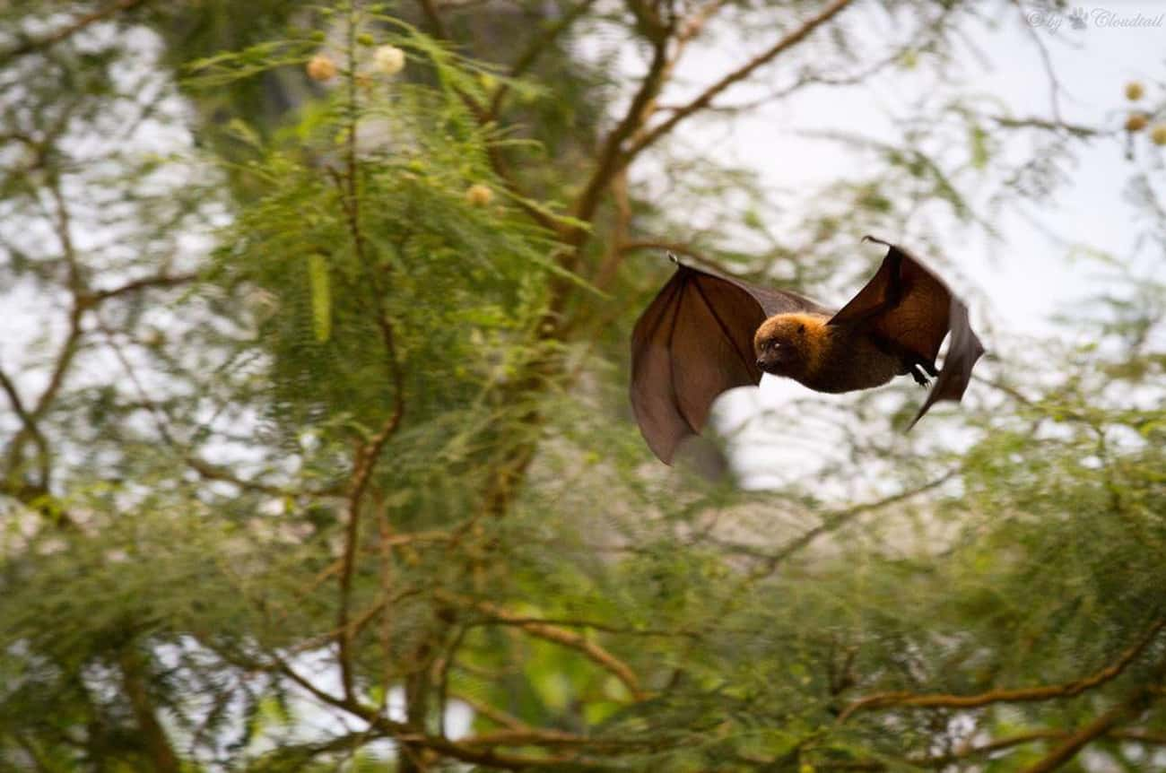 They Are The Only Mammals That is listed (or ranked) 1 on the list 17 Reasons Why Bats Are Actually Totally Badass