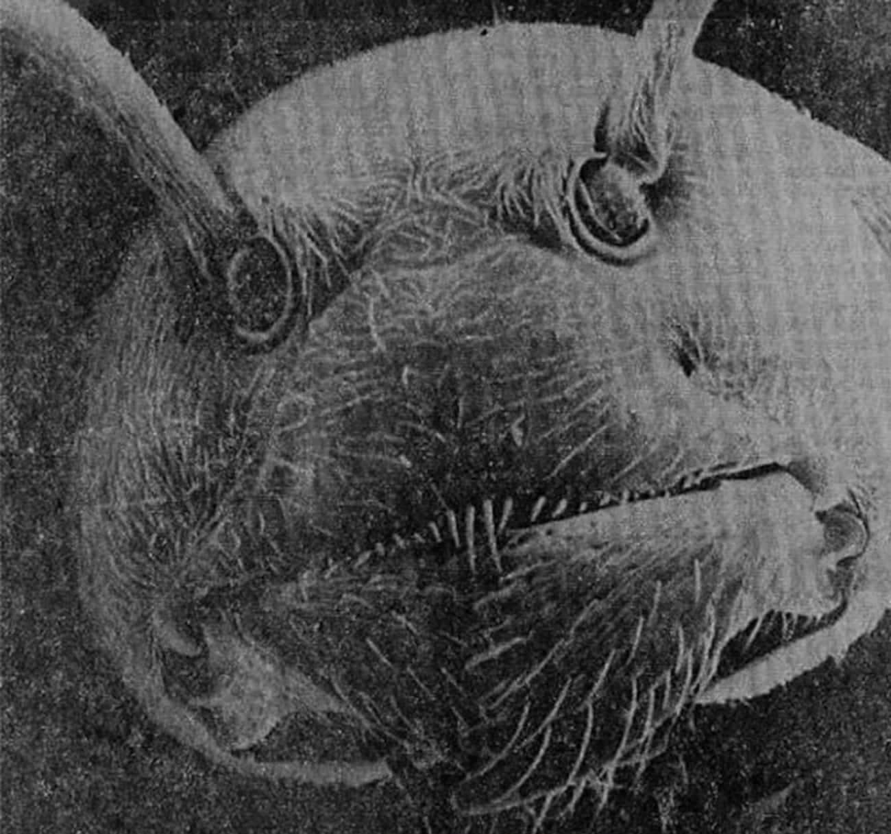 Ant Under Electron Microscope