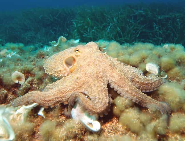 Inky's Great Escape is listed (or ranked) 1 on the list The Story Of Inky, The Most Badass Octopus In The Sea