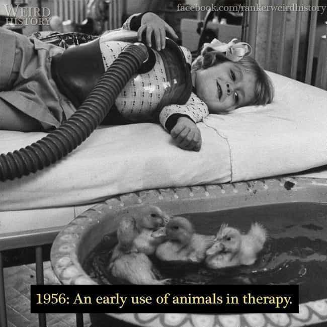 1956: Animals Introduced... is listed (or ranked) 4 on the list 15 Stunning Photos of Rudimentary Medical Treatments Throughout History