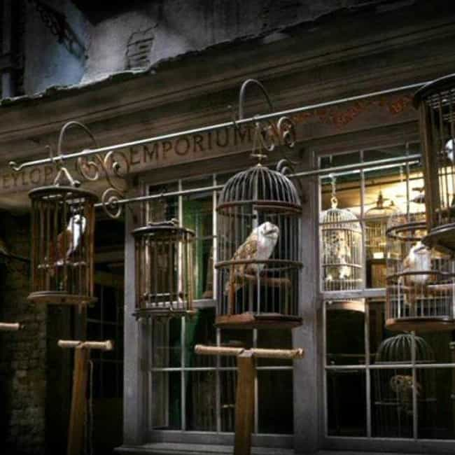 Owls is listed (or ranked) 1 on the list All The Coolest Non-Wand Things You Can Buy In Diagon Alley