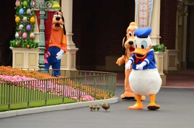 Absolutely Quackers is listed (or ranked) 4 on the list 25 Of The Funniest Photos Ever Taken At Disneyland