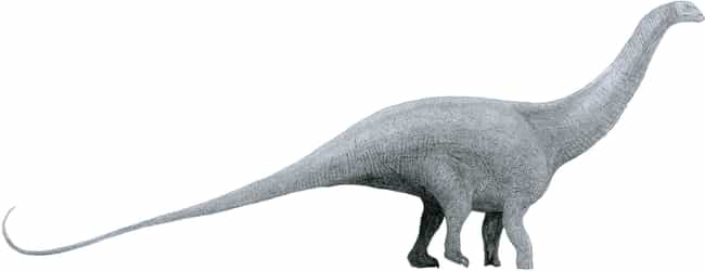 The Brontosaurus Was A R... is listed (or ranked) 1 on the list 14 Laughably Wrong Things People Used To Think About The Dinosaurs