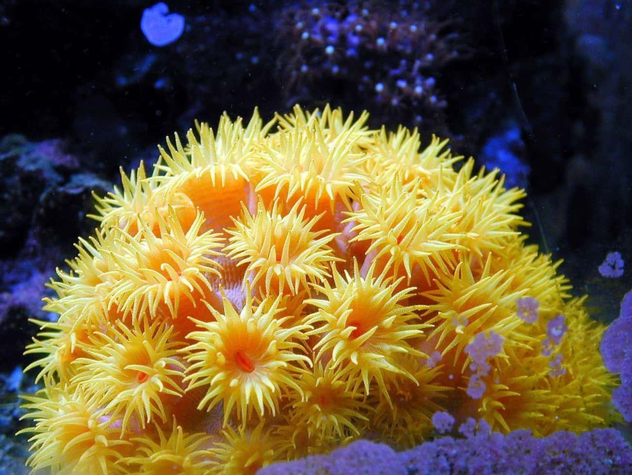 While Disguised As A Flower, T is listed (or ranked) 3 on the list 19 Crazy Awesome Sea Creatures That Can Change Their Shape, Color, And Size
