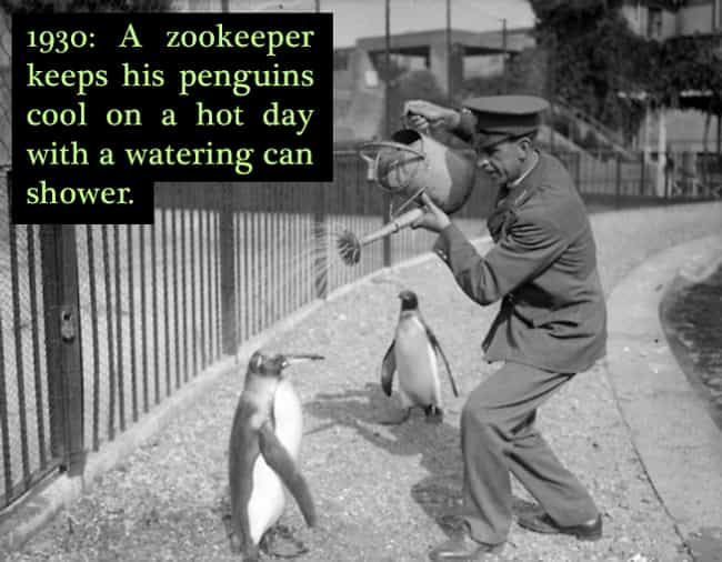 1930: Watering A Penguin... is listed (or ranked) 1 on the list 24 Historical Photos of People Doing Really Weird Things With Animals