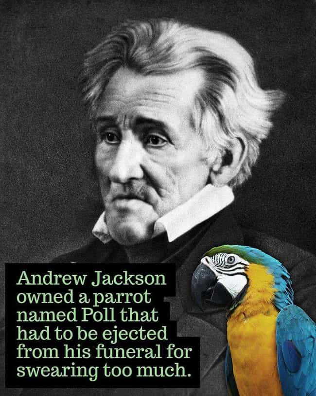 1845: Andrew Jackson's V... is listed (or ranked) 2 on the list 24 Historical Photos of People Doing Really Weird Things With Animals