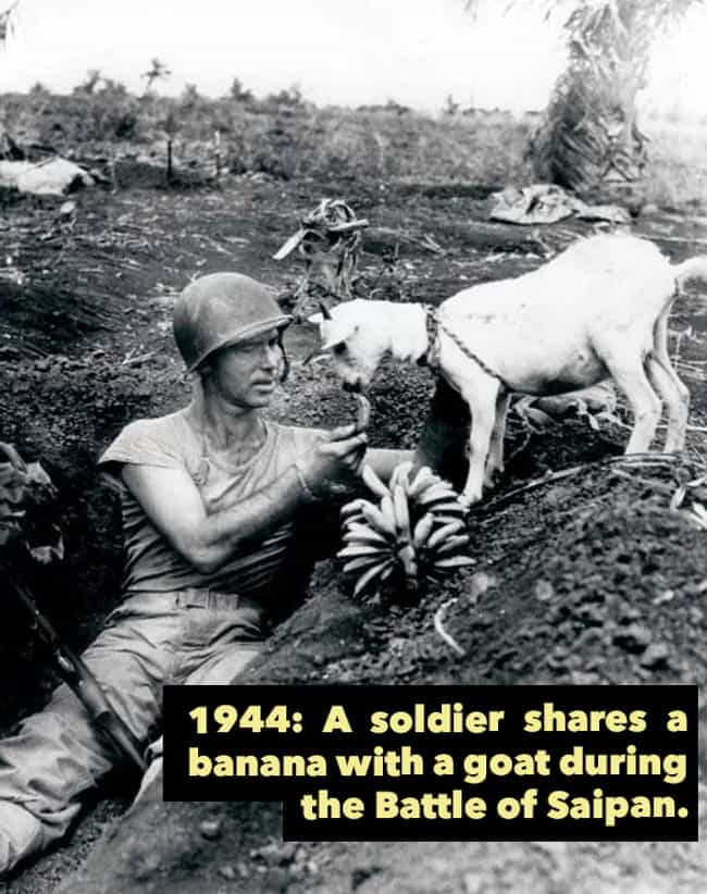 1944: Feeding A Goat On ... is listed (or ranked) 4 on the list 24 Historical Photos of People Doing Really Weird Things With Animals