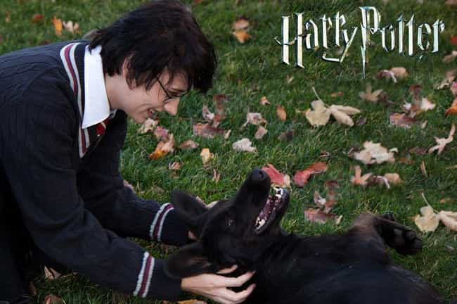 Harry Potter And Sirius ... is listed (or ranked) 4 on the list Totally Magical Harry Potter Cosplay