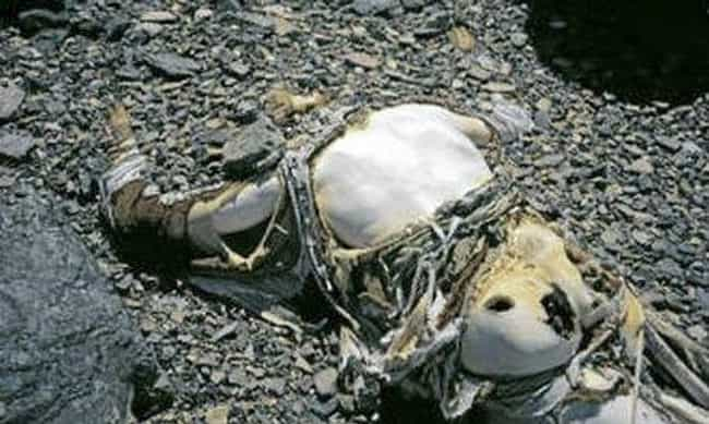 A Real-Life Indiana Jones Was ... is listed (or ranked) 4 on the list 12 Disturbing Stories Of Dead Bodies Left To Decompose On Top Of Mount Everest