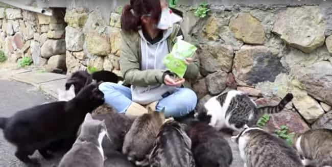 The Island Used To Have A Lot ... is listed (or ranked) 2 on the list You Need To Know About Aoshima, The Island Of Cats