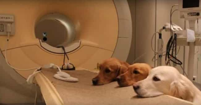 Humans And Dogs Share The Same... is listed (or ranked) 4 on the list 16 Things We've Learned From Scanning Dog Brains