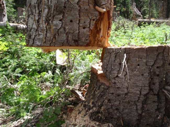 Totally Stumped is listed (or ranked) 2 on the list 24 Awesome Photos That Defy The Laws of Physics