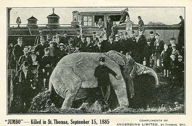 Jumbo Was An Alcoholic ... is listed (or ranked) 4 on the list The Bittersweet Story Of Jumbo, The Most Famous Elephant On Earth