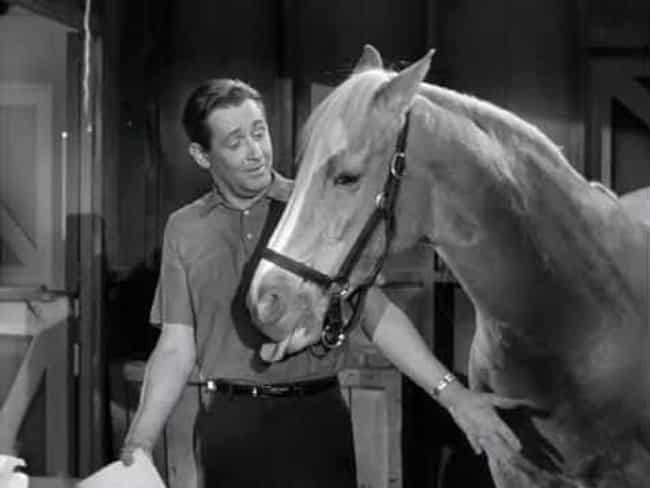 Bamboo Harvester Was Born In C... is listed (or ranked) 1 on the list The Inexplicably Strange History Of Mr. Ed The Horse