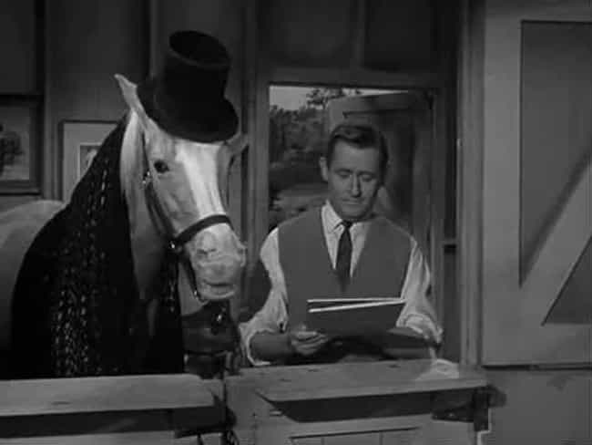 He Wasn't Even Originall... is listed (or ranked) 2 on the list The Inexplicably Strange History Of Mr. Ed The Horse